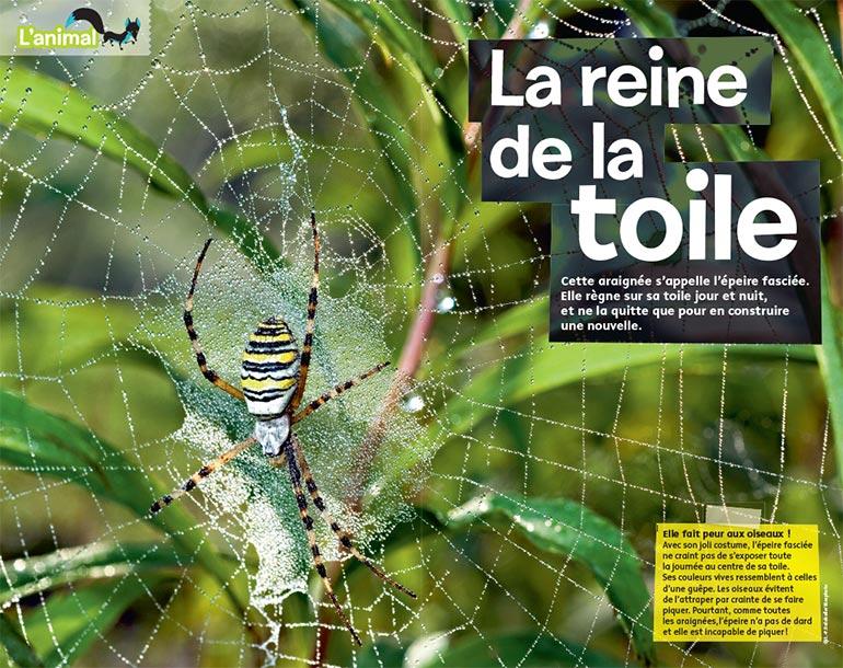 """""""L'animal : La reine de la toile"""", Images Doc n° 362, février 2019. Textes : Texte : Nathalie Tordjman. Photo d'ouverture : J.-P. Delobelle/Biosphoto."""