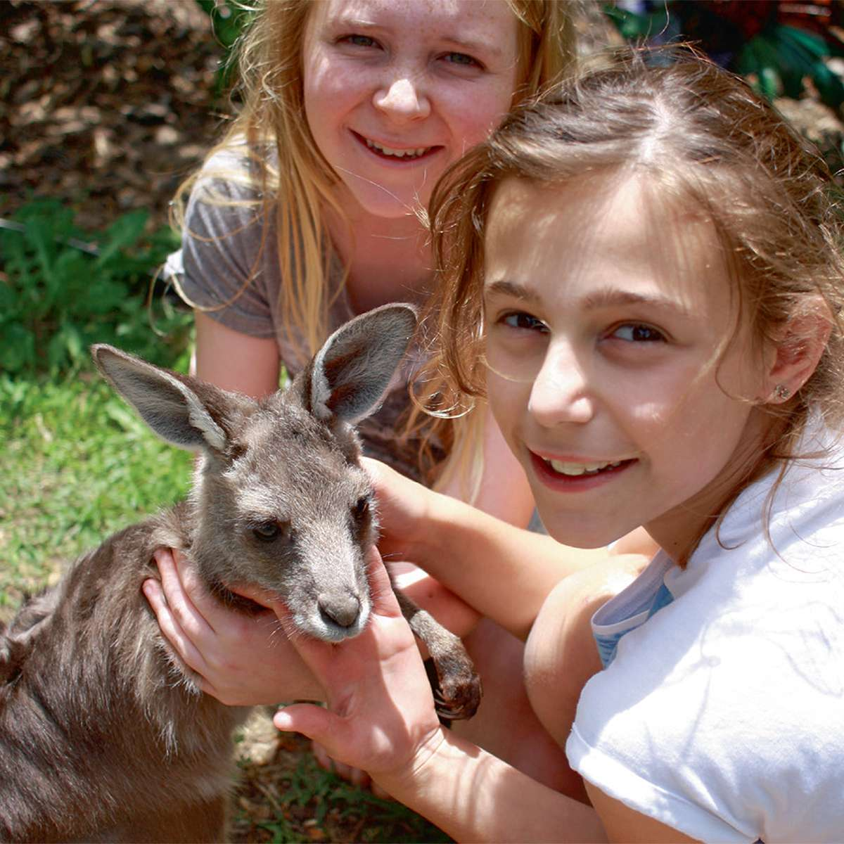 Save the kangaroos !