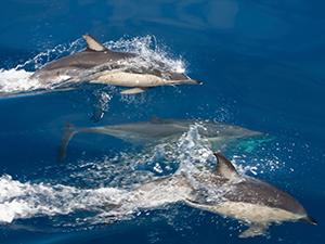 Se balader en bateau sur la costa da Serra pour observer les dauphins.