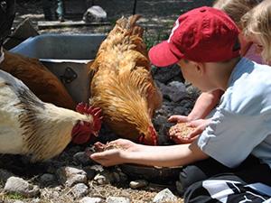 Les enfants aimeront vivre comme des vrais fermiers avec l'atelier soin nourrissage des animaux.