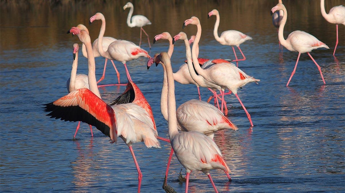 Pixabay. Séjour découverte des animaux sauvages en Camargue.